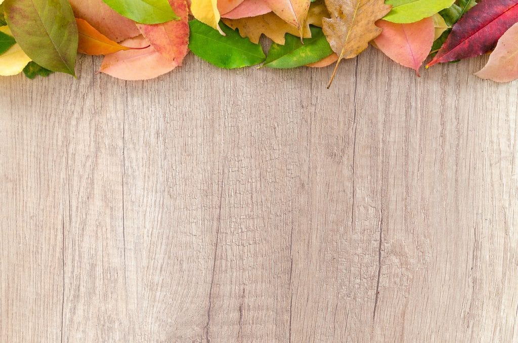 Your Fall Roof Checkup Guide | Provided By Bay Area Roofing